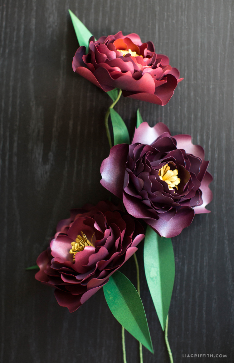Paper Peonies In Plum Lia Griffith